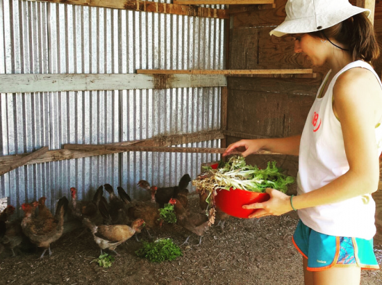 A woman feeds plants to a group of chickens