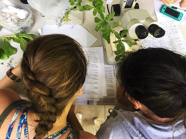 photo from above, the backs of the heads of two young people looking at papers and plants on a desk