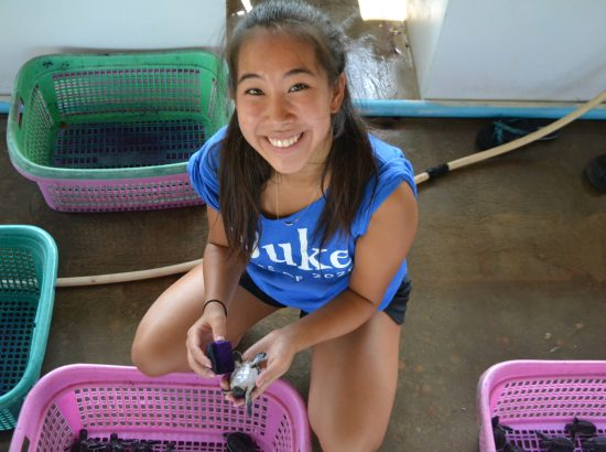A DukeEngage student cleaning baby turtles