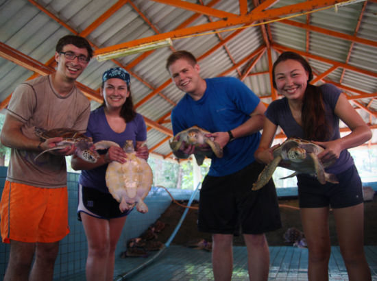 Four students each hold a turtle