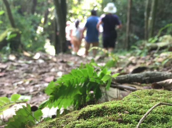a mossy rock in the foreground, students walking through a forest in the background