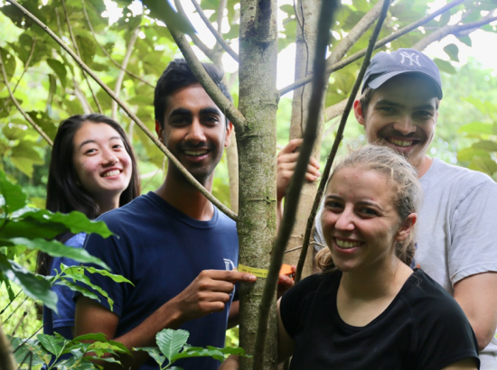 four young people posing behind tree limbs