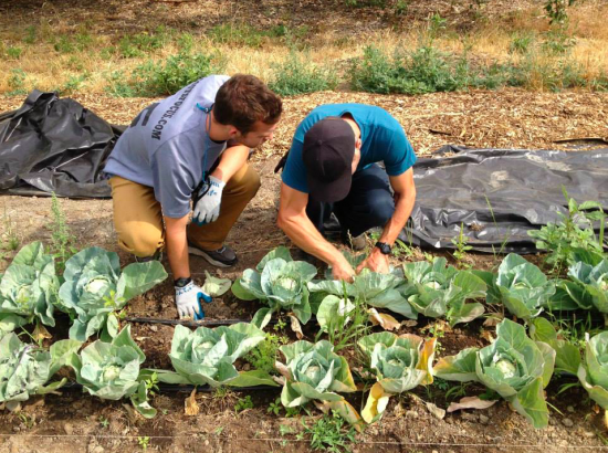 students weeding a vegetable bed