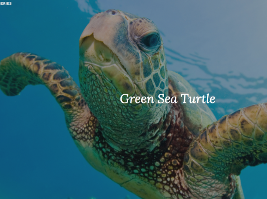 photo of turtle underwater with words and navigation at top of screen