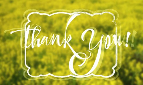 Grateful card with hand written lettering Thank You on natural yellow floral blurry background. Vector illustration