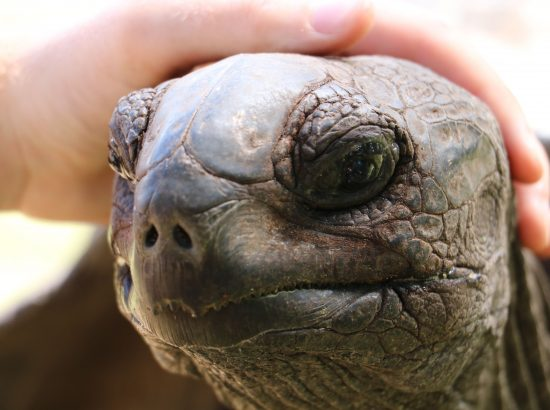 close up of turtle face