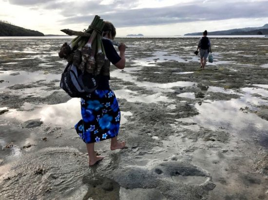 Man walks across mudflat carrying dalo with tree branch