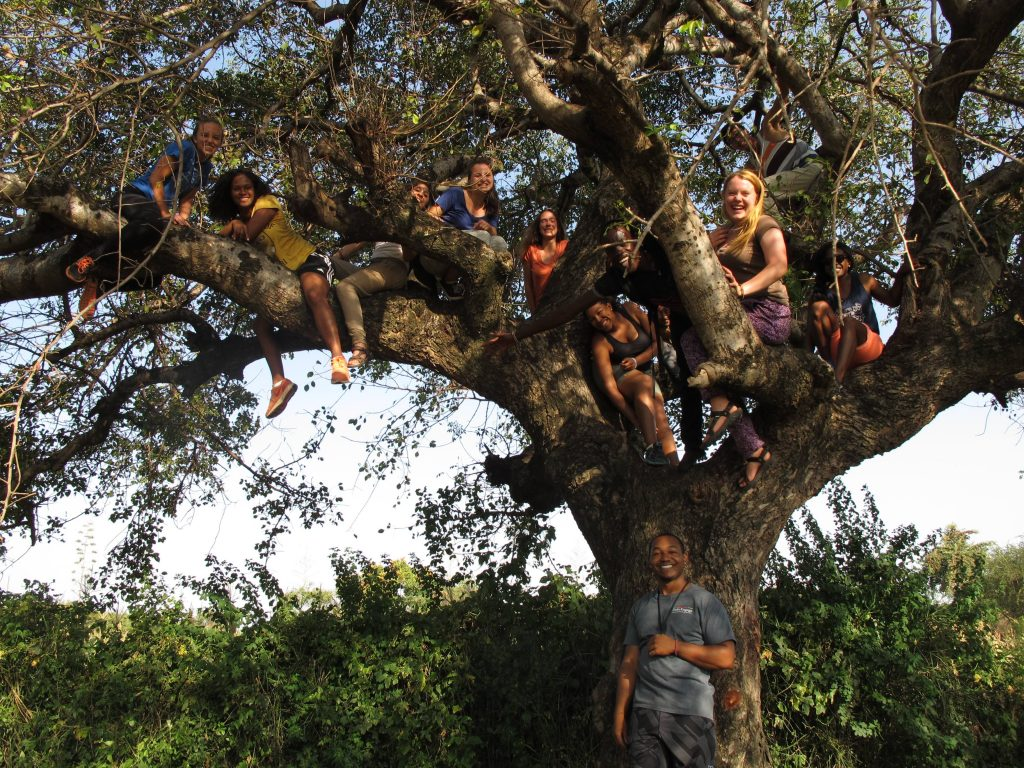 A group of smiling young people sitting in the branches of a large tree
