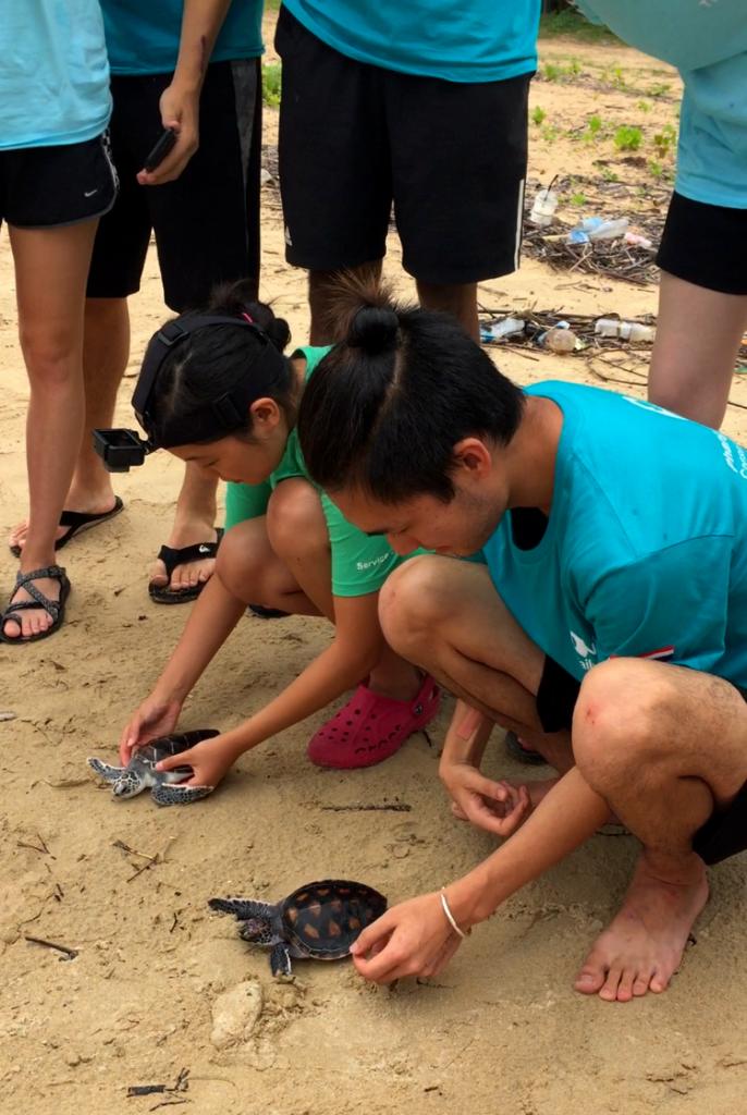 people looking at turtles on beach