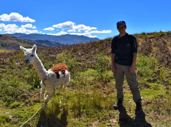 Student standing next to alpaca