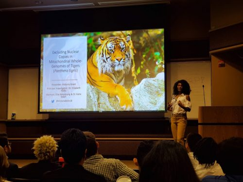A presentation on genetic diversity of captive tigers