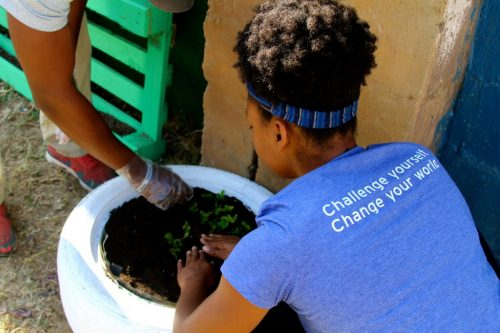 Girl in DukeEngage t-shirt planting greens in white tire.